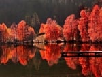 Red Autumn Reflection