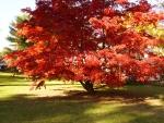 HD Autumn