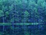 gorgeous forest reflections in a lake