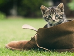 There-Was-A-Young-Cat-That-Lived-In-A-Shoe