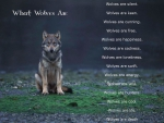 What Wolves are