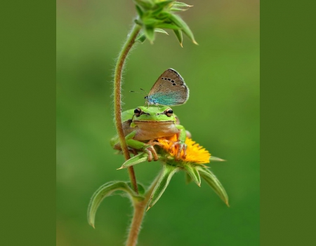 The frog and the butterfly - butterfly, blue, plant, frog, green, flower