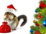 Chipmunk Sant Christmas