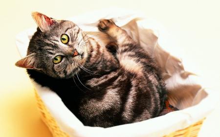 Cat Wallpaper Bread