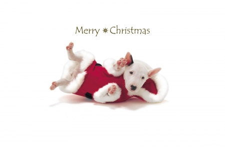Merry Christmas Animals.Merry Christmas Dogs Animals Background Wallpapers On