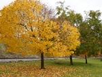 Sparkling Autumn