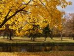 Simply Beautiful Fall