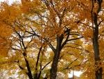 Scenic Tranquil Autumn