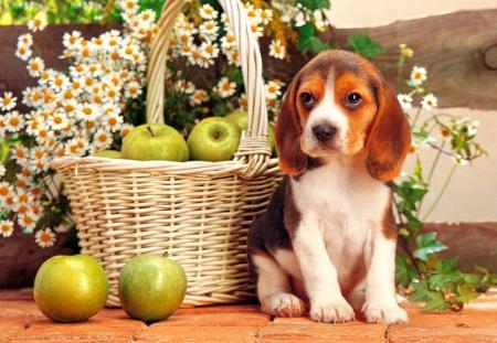 Cute Puppy Dogs Animals Background Wallpapers On Desktop Nexus