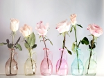 Roses in a Multicolor Bottles