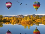 hot air balloons and geese reflected in a lake