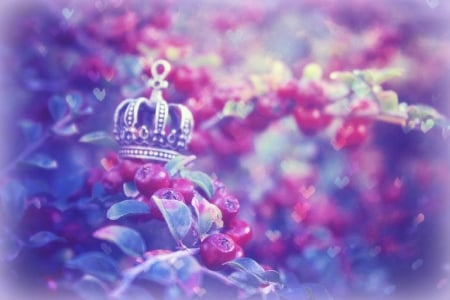 King Crown Wallpaper The Pixie King's Crown - hearts, photography, magnificent, other ...