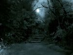 Full Moon In A Dark Forest