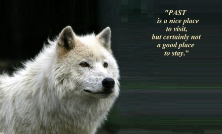 a wolf - wallpaper, friendship, quotes, pack, dog, lobo, arctic, maned wolf nature, black, abstract, winter, timber, snow, wolf wallpaper, wolfrunning, wolf, white, lone wolf, howling, wild animal black, howl, canine, wolf pack, solitude, grey, the pack, mythical, majestic, wisdom beautiful, spirit, canis lupus, grey wolf, wolves
