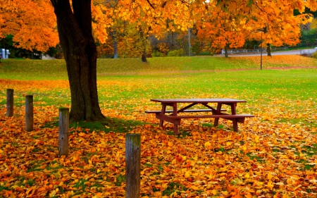 *** Autumn in park *** - fall, autumn, nature, park