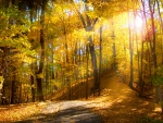 *** Nice sunshine in autumn forest ***