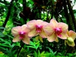 Orchids in Forest in Hawaii