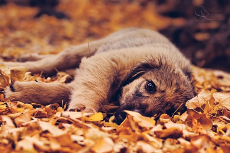 Autumn dog - pretty, lovely, playful dog, playful, beautiful, sweet, dog face, cute, puppies, face, animals, dogs, puppy