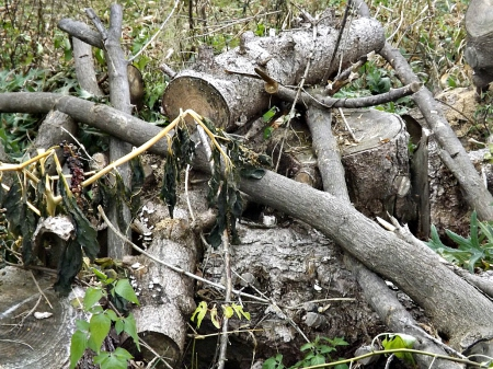 rustic mess - twigs, logs, foilage, wood, bark