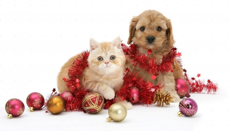 Cute Christmas Puppies.Cute Christmas Pets Dogs Animals Background Wallpapers