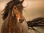 Wild Mustang F5