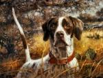 Pointer Hunting Dog 1