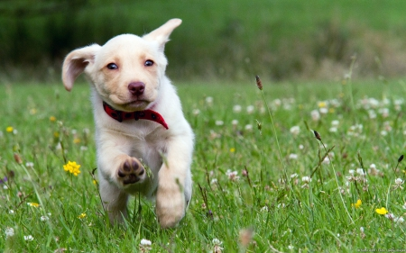 Dog - pretty, lovely, playful dog, playful, beautiful, sweet, dog face, cute, puppies, face, animals, dogs, puppy