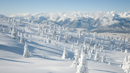 Winter Wonderland - snow forest, scenic winter, winter scene, snowscape, snowy, Winter Wonderland