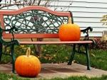 Autumn Harvest Bench