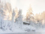 Lapland beauty