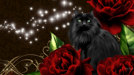 Black Cat Roses Flowers Amp Nature Background Wallpapers
