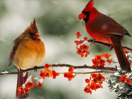 Cardinal couple other abstract background wallpapers - Winter cardinal background ...