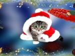 ~*~ Christmas ~*~