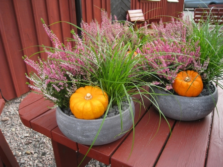 Autumn Arrangement - table, autumn, pots, stones, grass, Pumpkins, plant