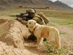 Infantryman and his dog