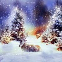 a winter tale - christmas in lapland