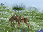Hugging Fawns