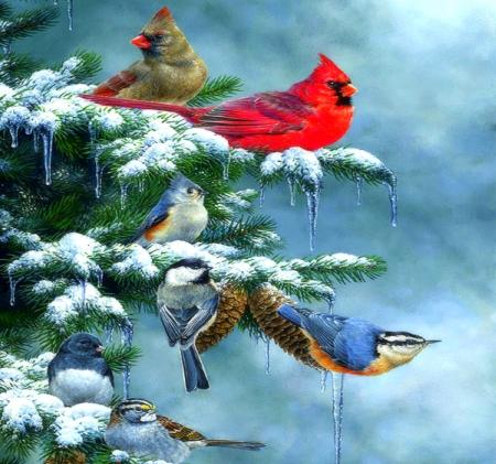 Christmas Cardinals Images.Christmas Cardinals Birds Animals Background