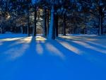 Snowy Dark Forest