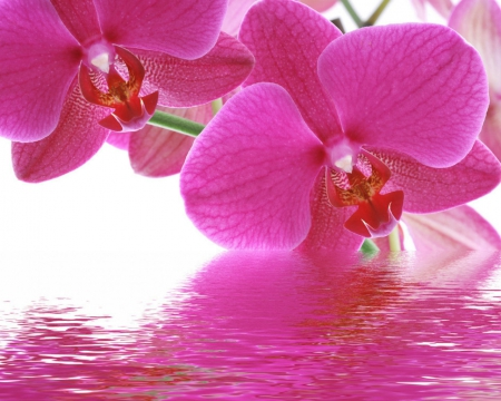 Pink Orchids Flowers Nature Background Wallpapers On