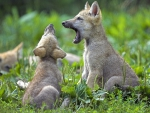 first howl