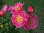 melody garden