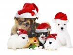 Christmas Pets!