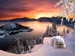 ~*~ Polar Bear ~*~