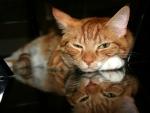 My Cat_Dyllan