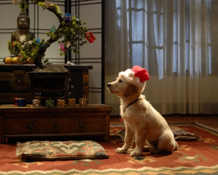 waiting for santa claus dogs animals background. Black Bedroom Furniture Sets. Home Design Ideas
