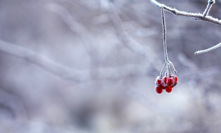Winter Berries!