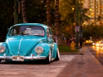 Hawaii Beetle
