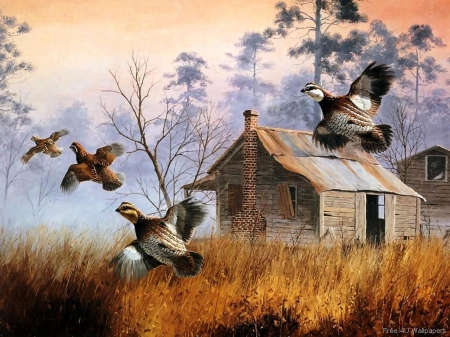 Flying Birds - art, flying, painting, animals, Birds
