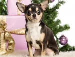 Adorable Christmas!♥